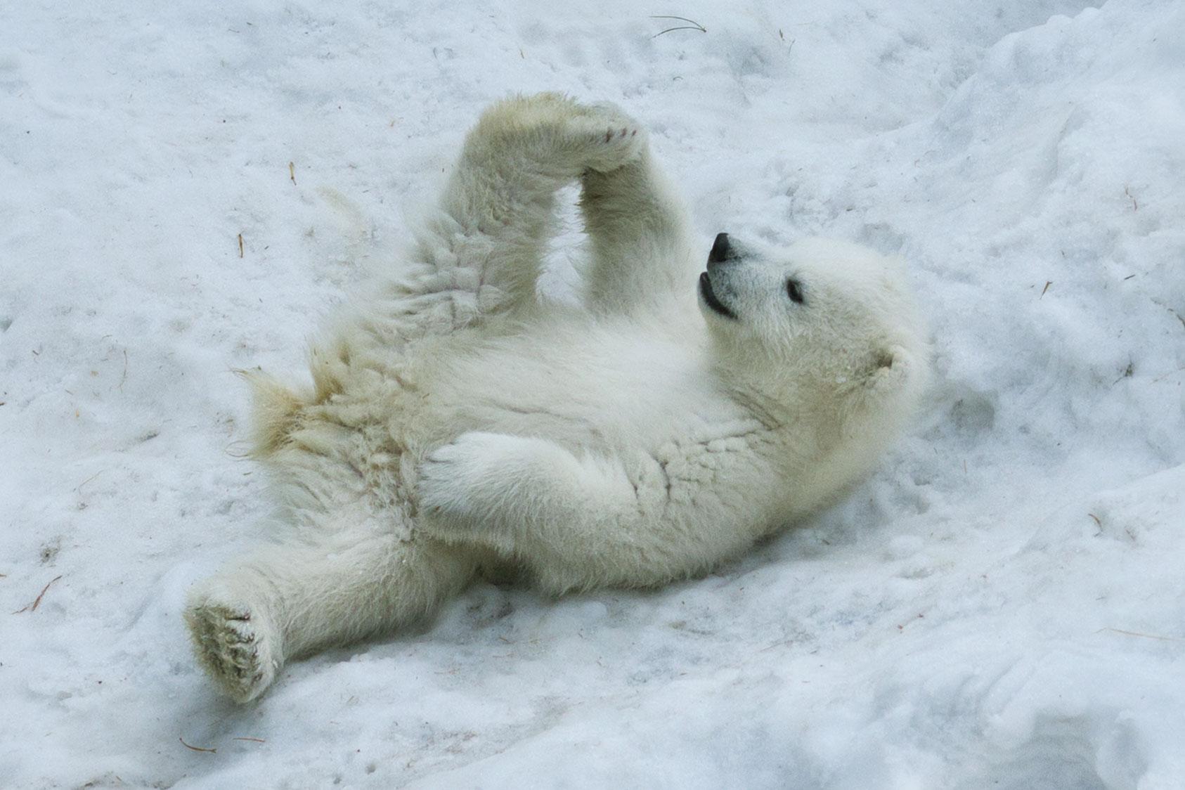 Winter yoga workshop image