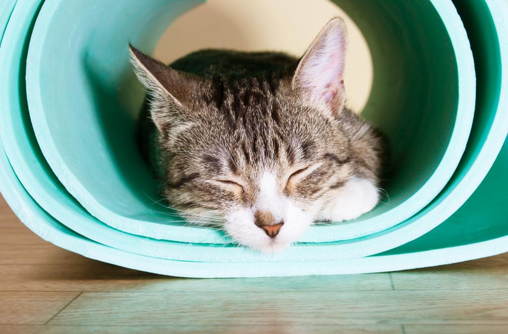 Yoga for Sleep Recovery